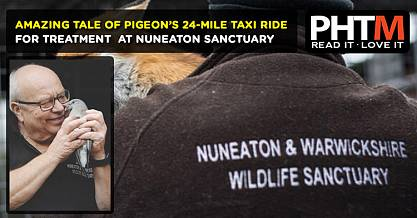 AMAZING TALE OF PIGEONS 24 MILE TAXI RIDE FOR TREATMENT AT NUNEATON SANCTUARY