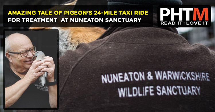 AMAZING TALE OF PIGEON'S 24-MILE TAXI RIDE FOR TREATMENT  AT NUNEATON SANCTUARY