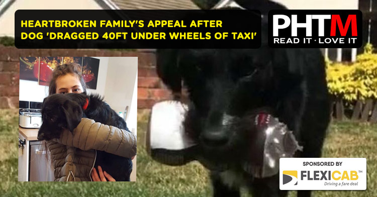 HEARTBROKEN FAMILY'S APPEAL AFTER DOG 'DRAGGED 40FT UNDER WHEELS OF TAXI'