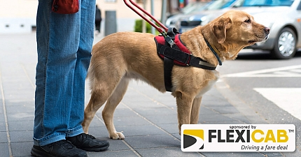 ABINGDON TAXI DRIVER FINED FOR REFUSING TO TAKE GUIDE DOG
